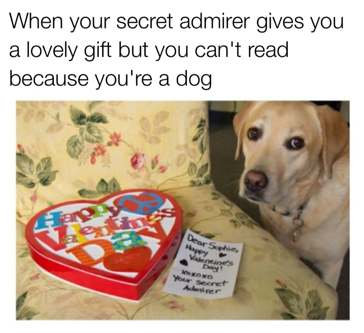 The 15 Funniest Valentine S Day Memes On The Internet