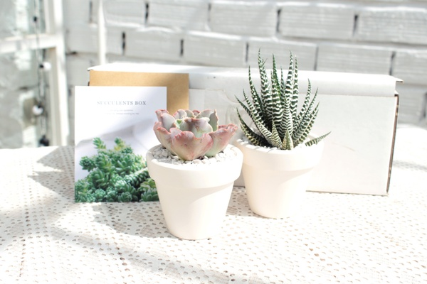 Source: Cratejoy/Succulents Box