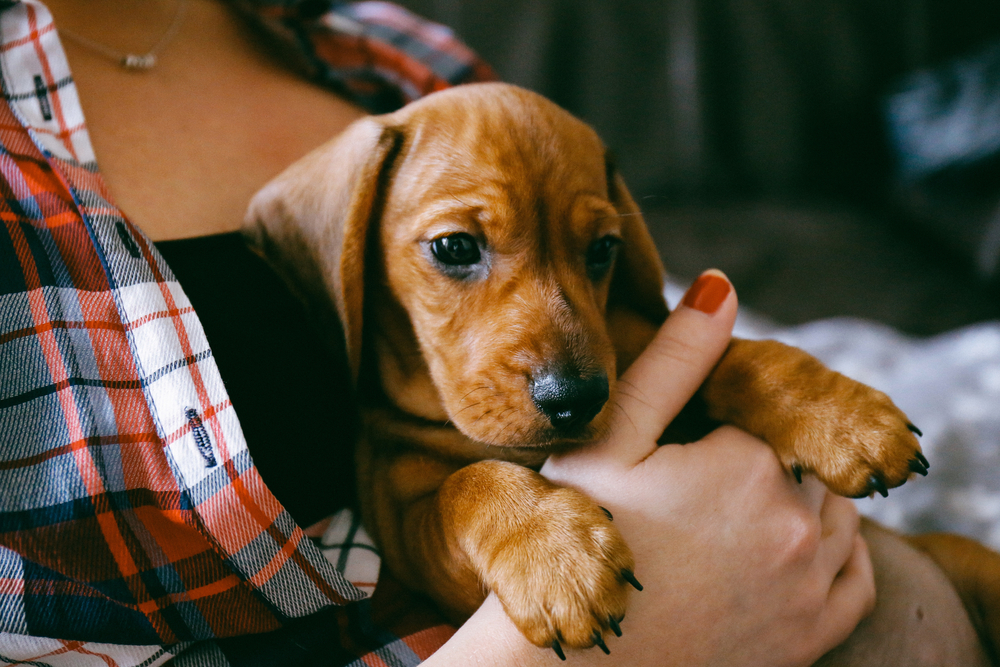 National Puppy Day: Tips For Bringing Your New Dog Home
